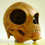 Sealand Skull